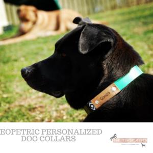 Geopetric Custom Pet Collar