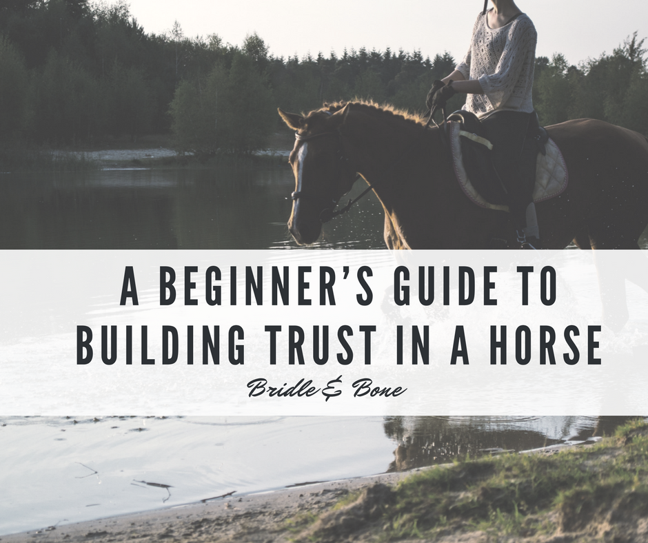 Beginner's Guide to Building Trust in a Horse