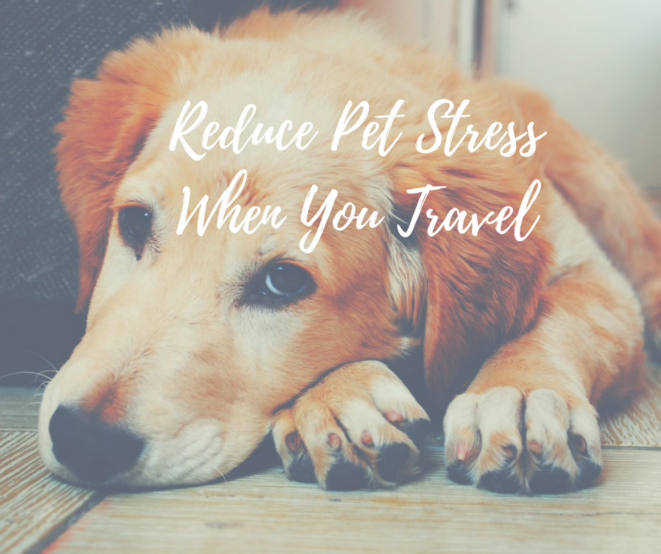 Reduce Pet Stress When You Travel