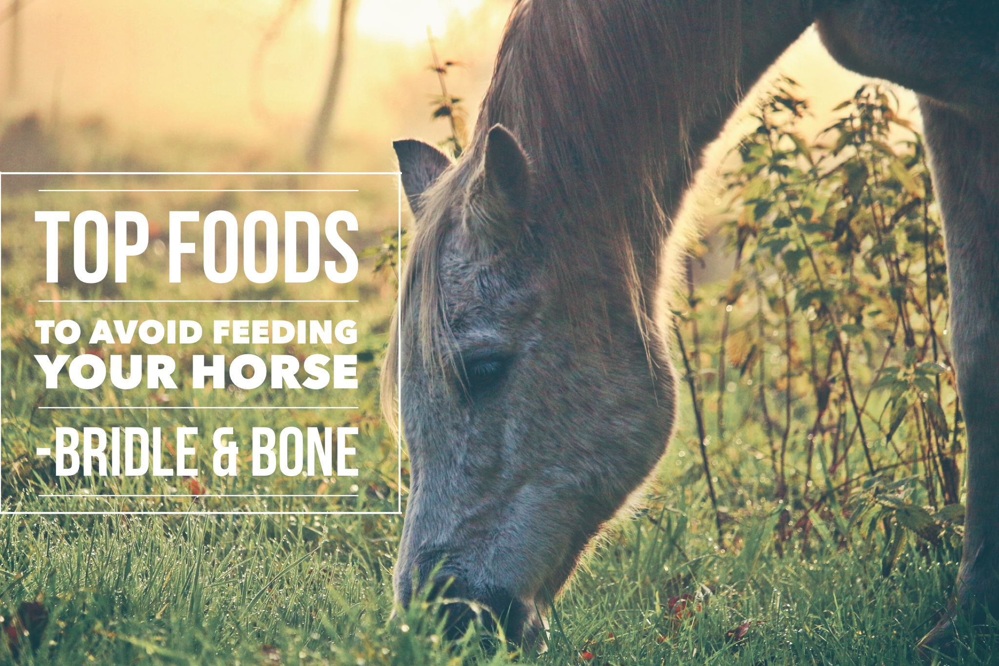 Top Foods to Avoid Feeding Your Horse