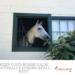 Horse Stall Rest Calm