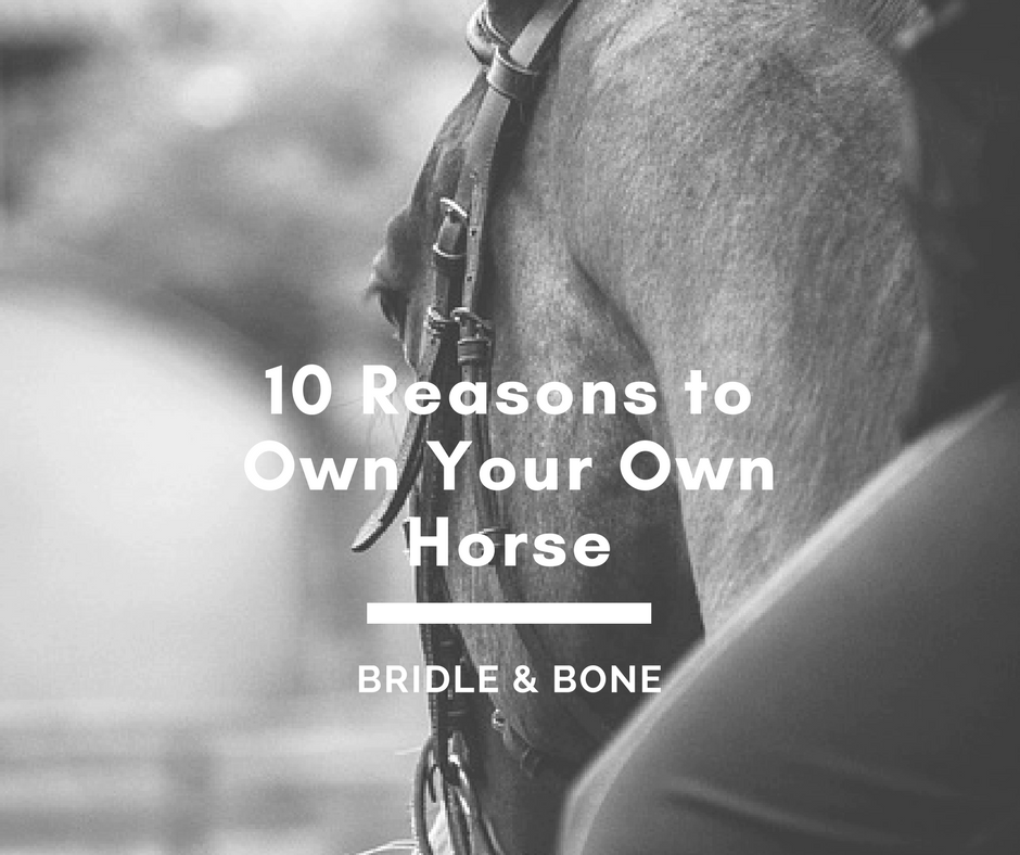 10 Reasons to Own Your Own Horse