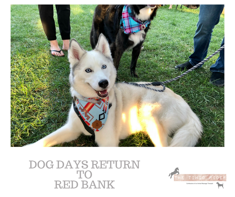 Red Bank Dog Days