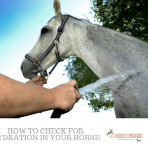 Horse Hydration