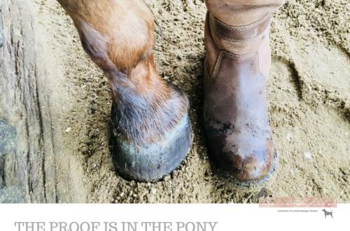proof pony