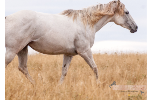 My First Horse Experience Blogtober