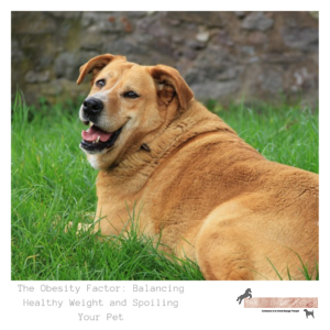 The Obesity Factor: Balancing Healthy Weight and Spoiling Your Pet