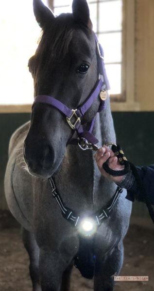 Headlight Harness for Horses