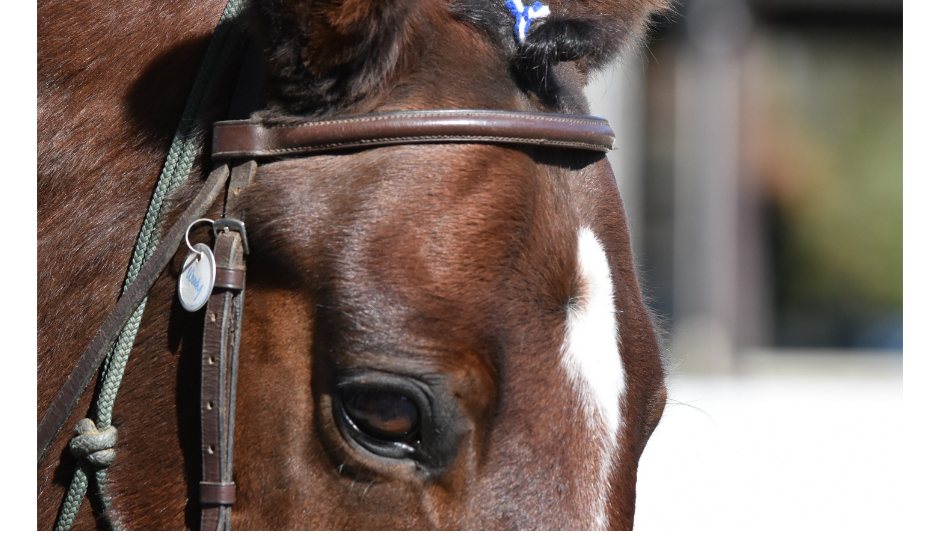 How to Keep Your Horse Calm on Stall Rest Naturally